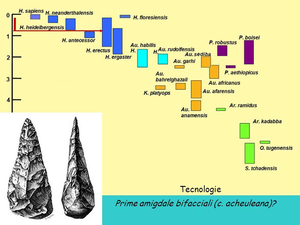 Tecnologie Prime amigdale bifacciali (c. acheuleana)