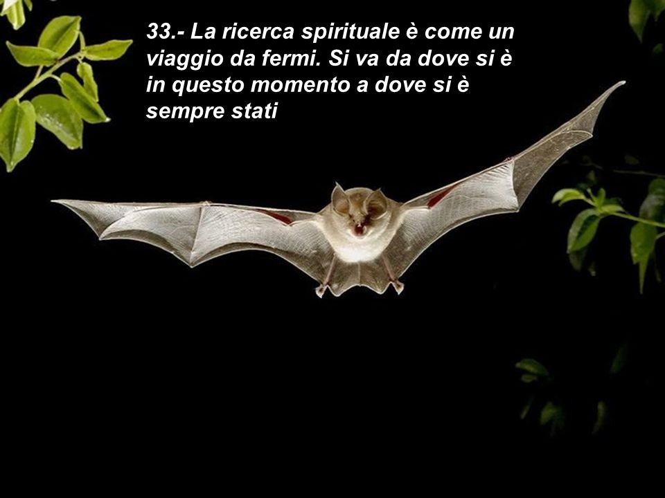33. - La ricerca spirituale è come un viaggio da fermi