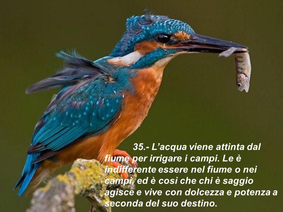 35. - L'acqua viene attinta dal fiume per irrigare i campi