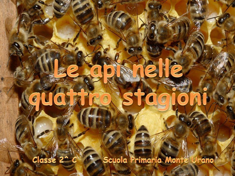 Le api nelle quattro stagioni Classe 2^ C Scuola Primaria Monte Urano