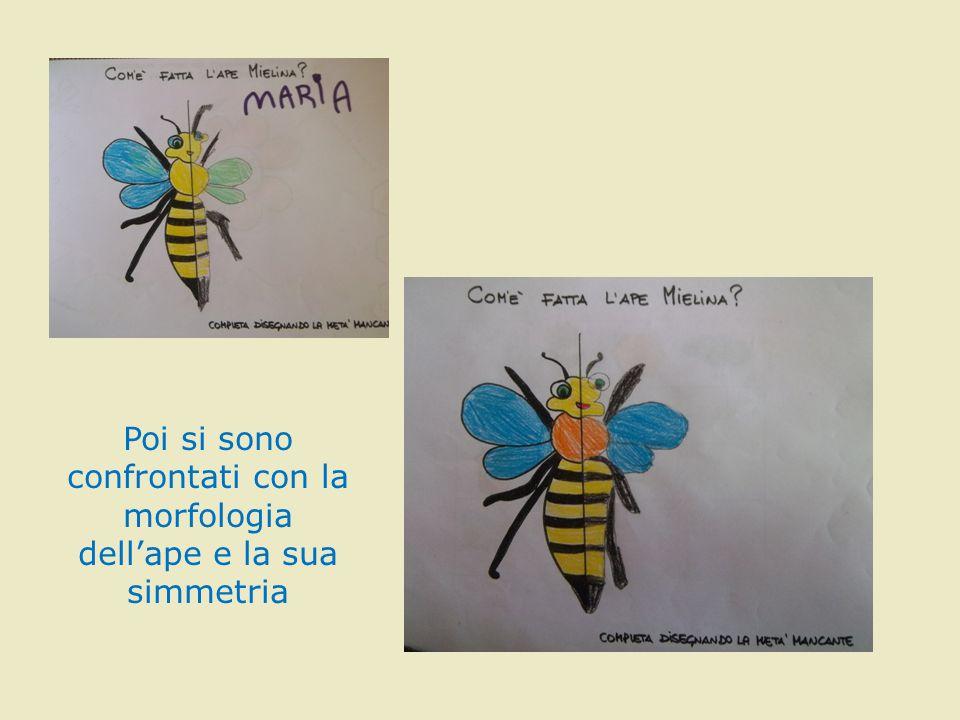 Poi si sono confrontati con la morfologia dell'ape e la sua simmetria