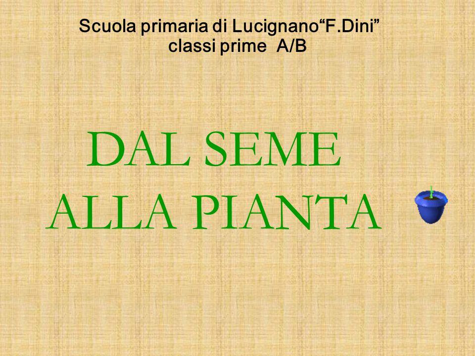 Scuola primaria di Lucignano F.Dini