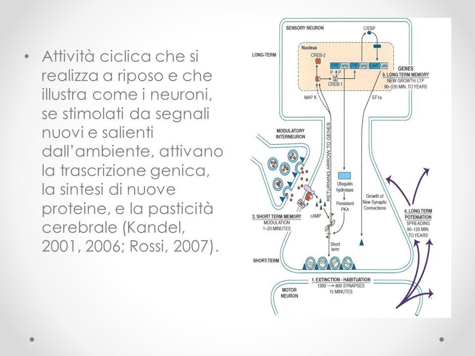 Attività ciclica che si realizza a riposo e che illustra come i neuroni, se stimolati da segnali nuovi e salienti dall'ambiente, attivano la trascrizione genica, la sintesi di nuove proteine, e la pasticità cerebrale (Kandel, 2001, 2006; Rossi, 2007).