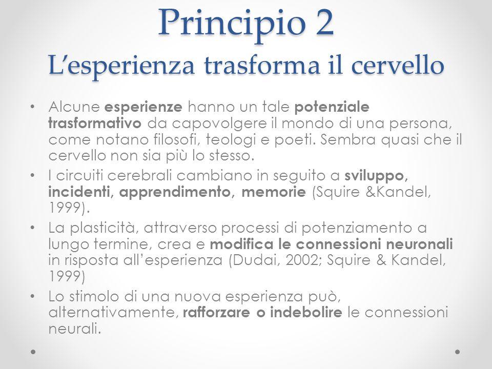 Principio 2 L'esperienza trasforma il cervello