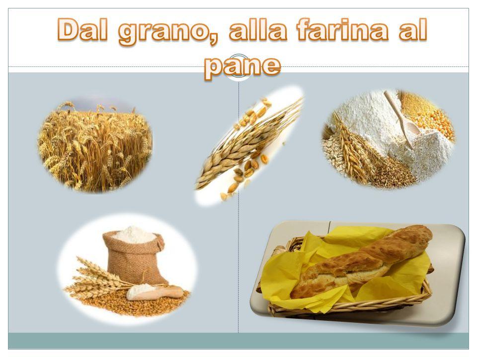 Dal grano, alla farina al pane
