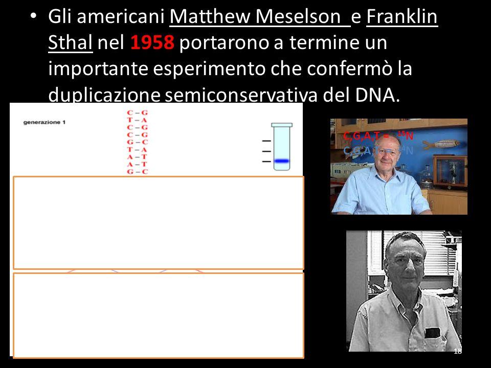 Gli americani Matthew Meselson e Franklin Sthal nel 1958 portarono a termine un importante esperimento che confermò la duplicazione semiconservativa del DNA.