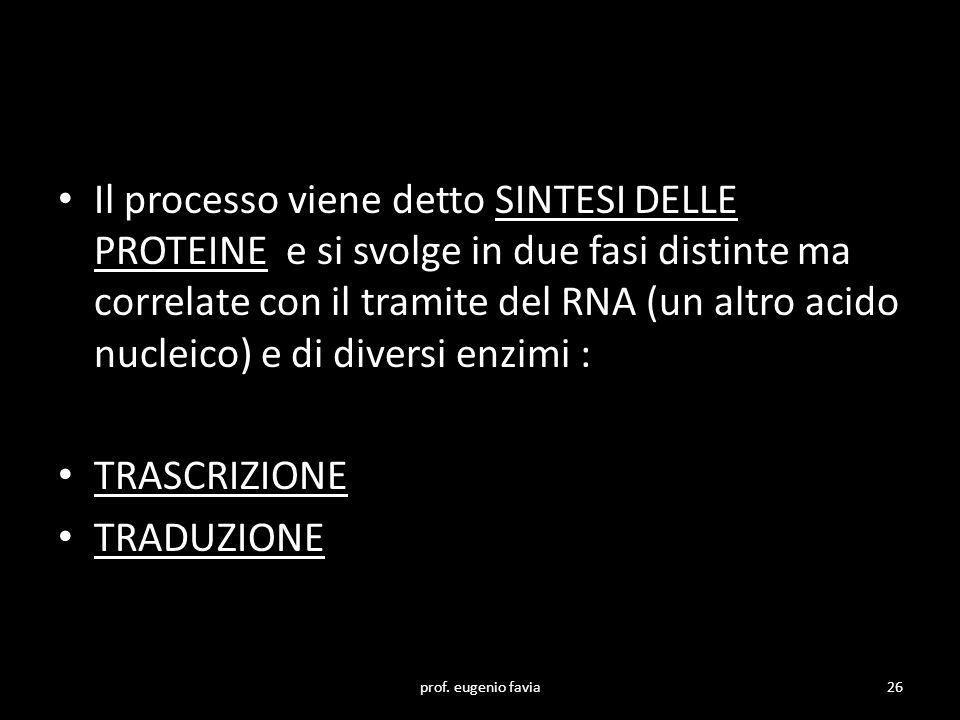 Il processo viene detto SINTESI DELLE PROTEINE e si svolge in due fasi distinte ma correlate con il tramite del RNA (un altro acido nucleico) e di diversi enzimi :