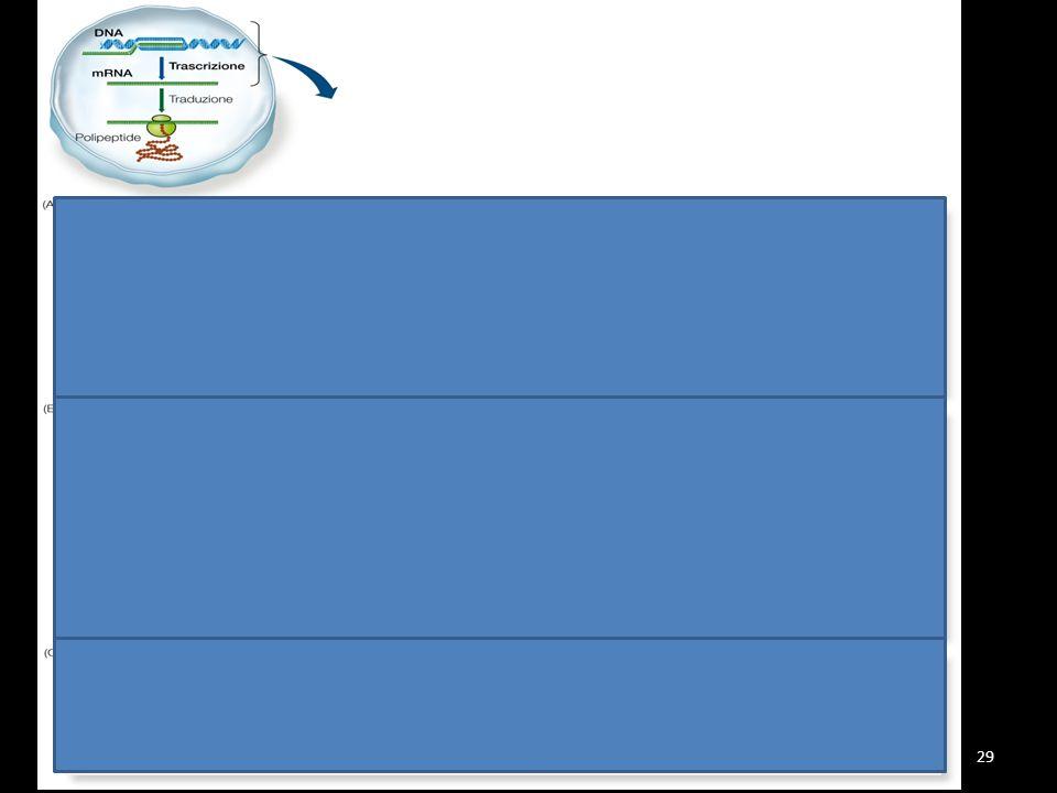 TRASCRIZIONE Il processo di trascrizione avviene in tre fasi