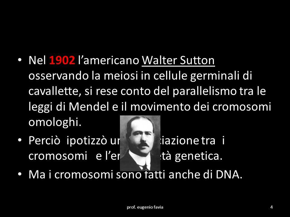Ma i cromosomi sono fatti anche di DNA.