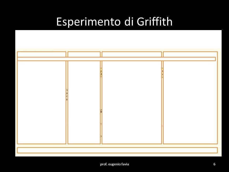 Esperimento di Griffith