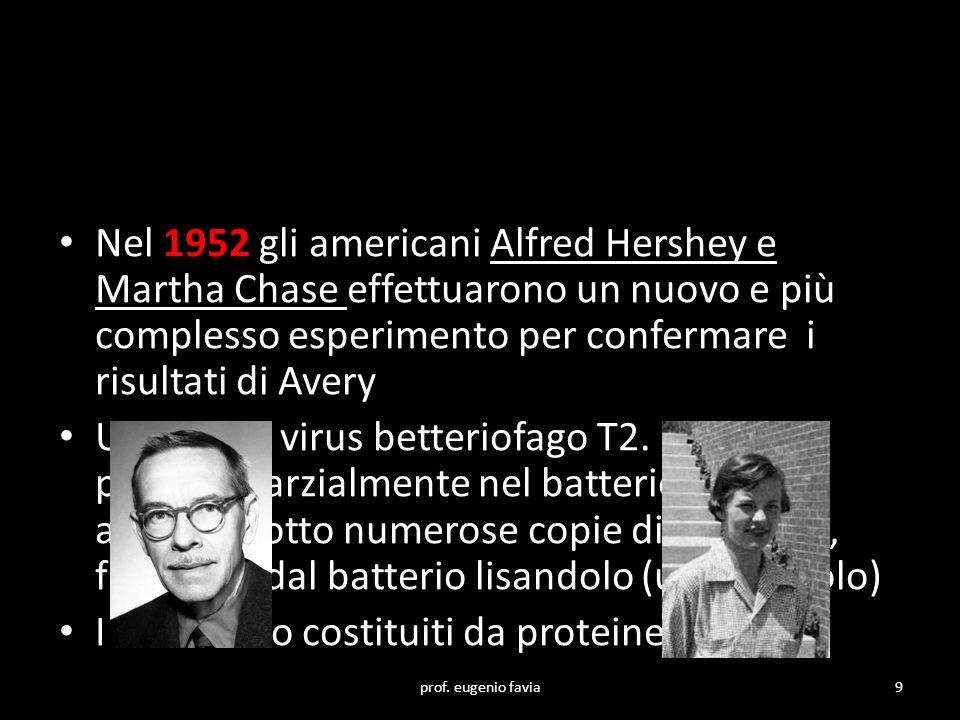 I virus sono costituiti da proteine e DNA