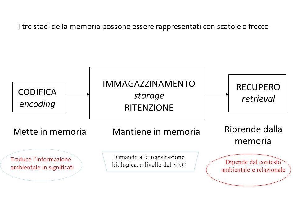RECUPERO retrieval CODIFICA encoding IMMAGAZZINAMENTO storage