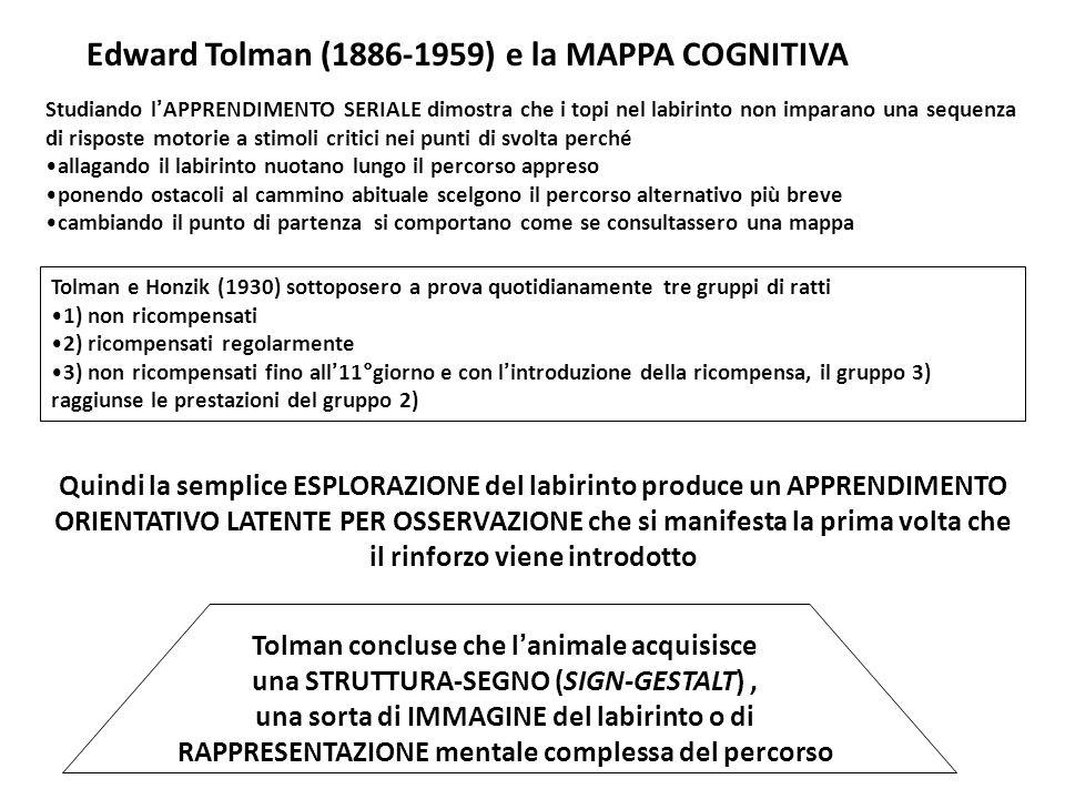 Edward Tolman (1886-1959) e la MAPPA COGNITIVA