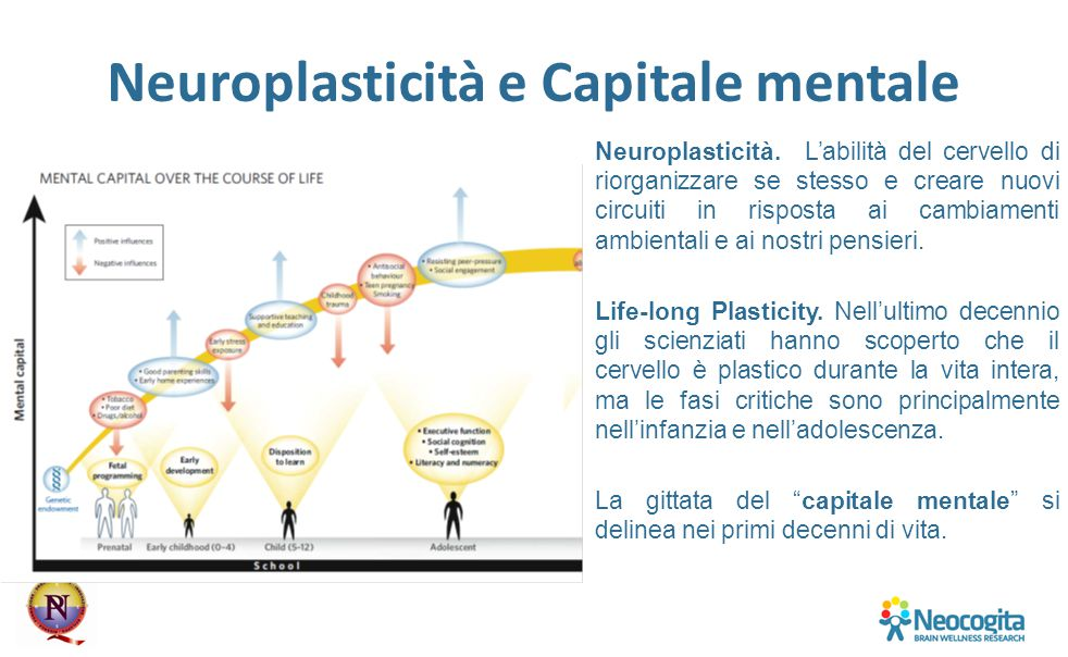 Neuroplasticità e Capitale mentale