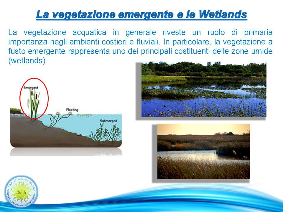 La vegetazione emergente e le Wetlands