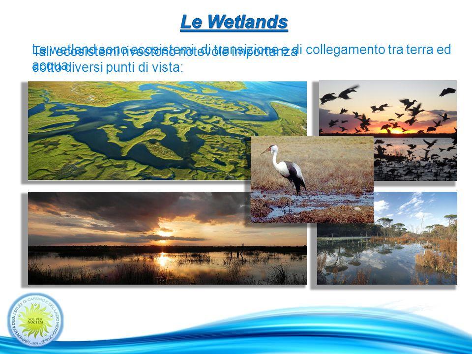 Le Wetlands Tali ecosistemi rivestono notevole importanza. sotto diversi punti di vista:
