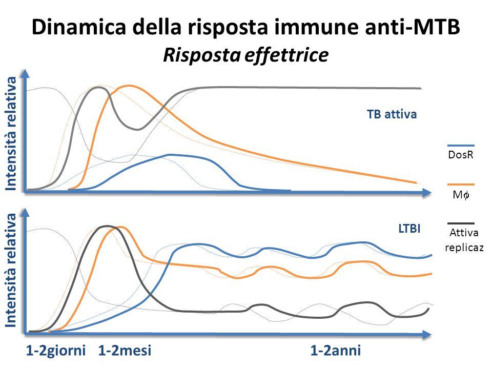 Dinamica della risposta immune anti-MTB