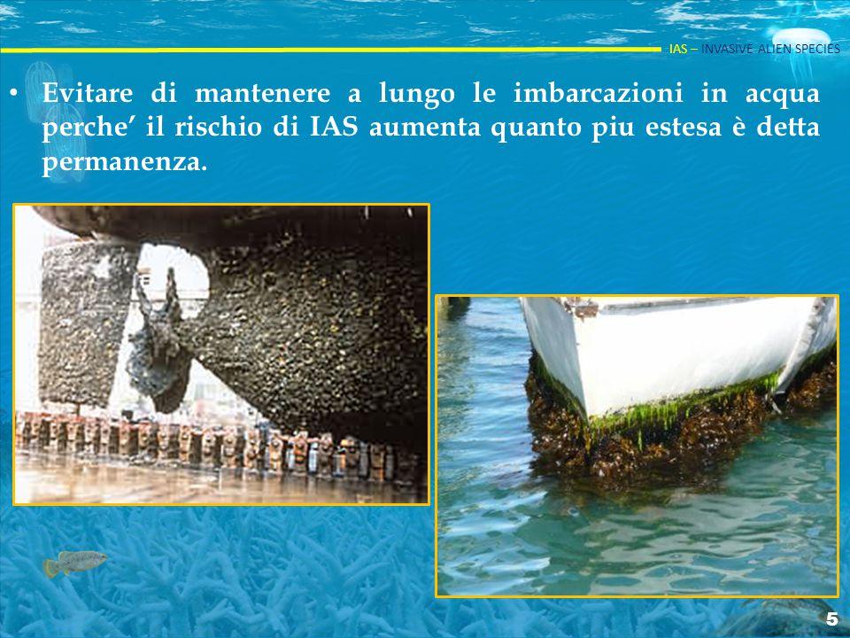 Evitare di mantenere a lungo le imbarcazioni in acqua perche' il rischio di IAS aumenta quanto piu estesa è detta permanenza.