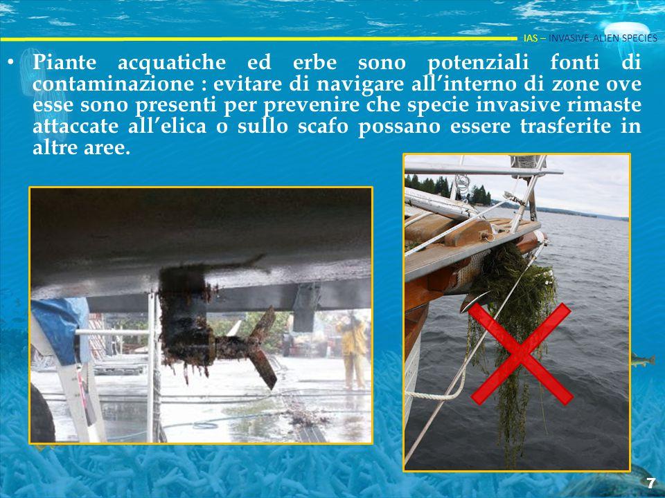 Piante acquatiche ed erbe sono potenziali fonti di contaminazione : evitare di navigare all'interno di zone ove esse sono presenti per prevenire che specie invasive rimaste attaccate all'elica o sullo scafo possano essere trasferite in altre aree.