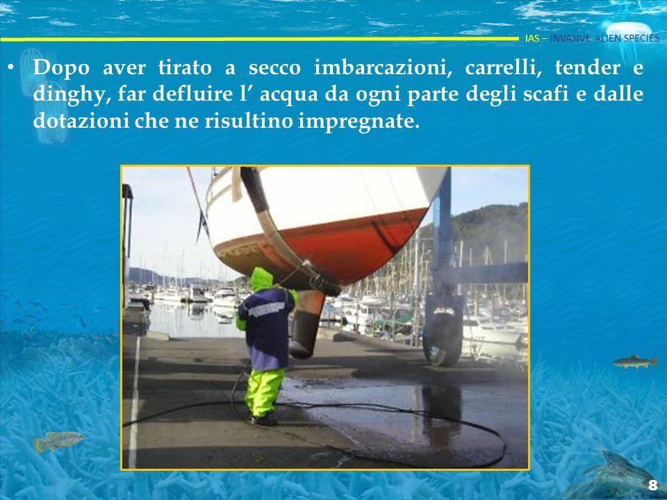 Dopo aver tirato a secco imbarcazioni, carrelli, tender e dinghy, far defluire l' acqua da ogni parte degli scafi e dalle dotazioni che ne risultino impregnate.