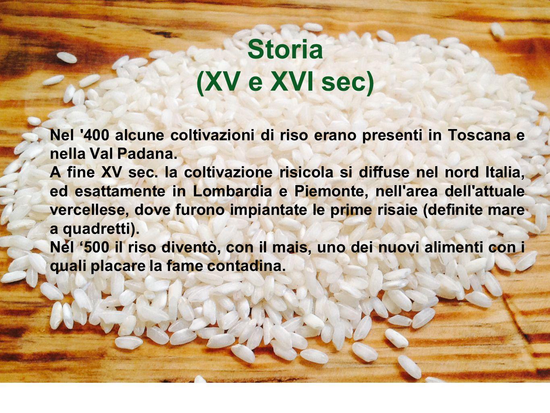 Storia (XV e XVI sec) Nel 400 alcune coltivazioni di riso erano presenti in Toscana e nella Val Padana.