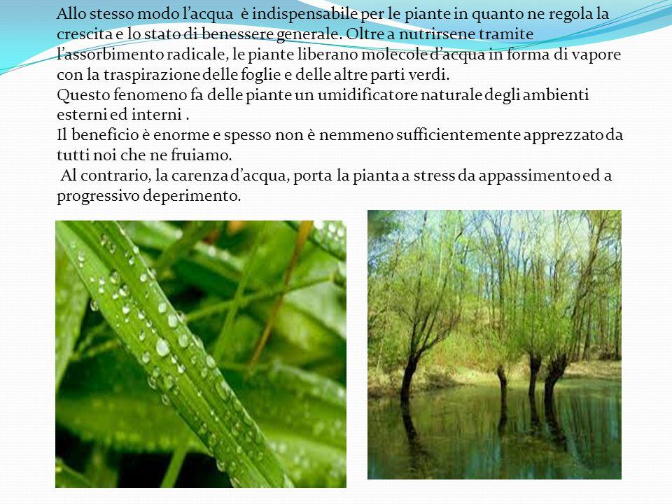Allo stesso modo l'acqua è indispensabile per le piante in quanto ne regola la crescita e lo stato di benessere generale. Oltre a nutrirsene tramite l'assorbimento radicale, le piante liberano molecole d'acqua in forma di vapore con la traspirazione delle foglie e delle altre parti verdi.