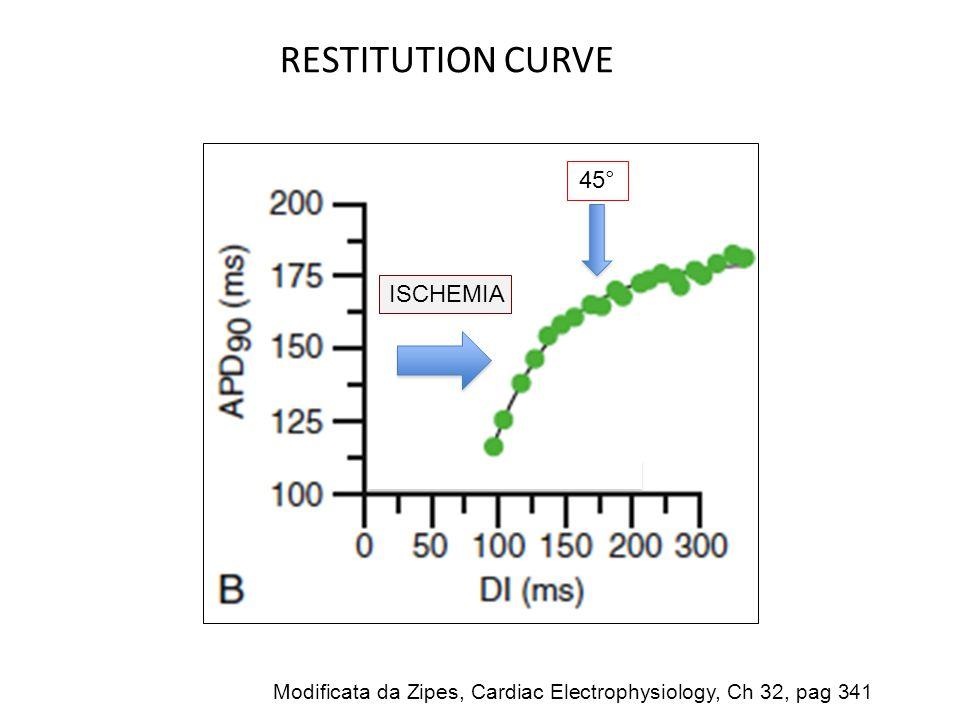 RESTITUTION CURVE 45° ISCHEMIA