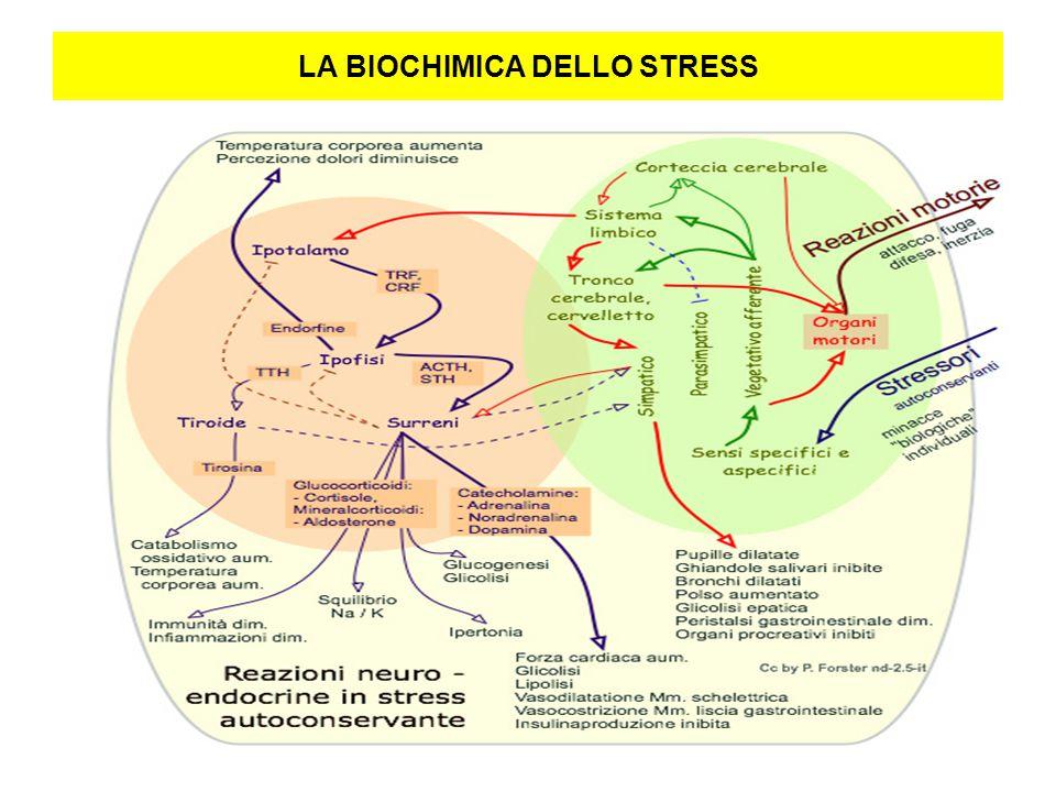 LA BIOCHIMICA DELLO STRESS