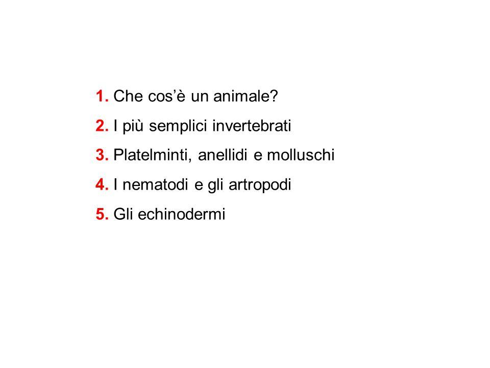 1. Che cos'è un animale. 2. I più semplici invertebrati. 3