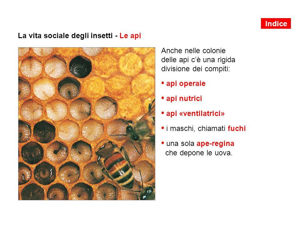 La vita sociale degli insetti - Le api