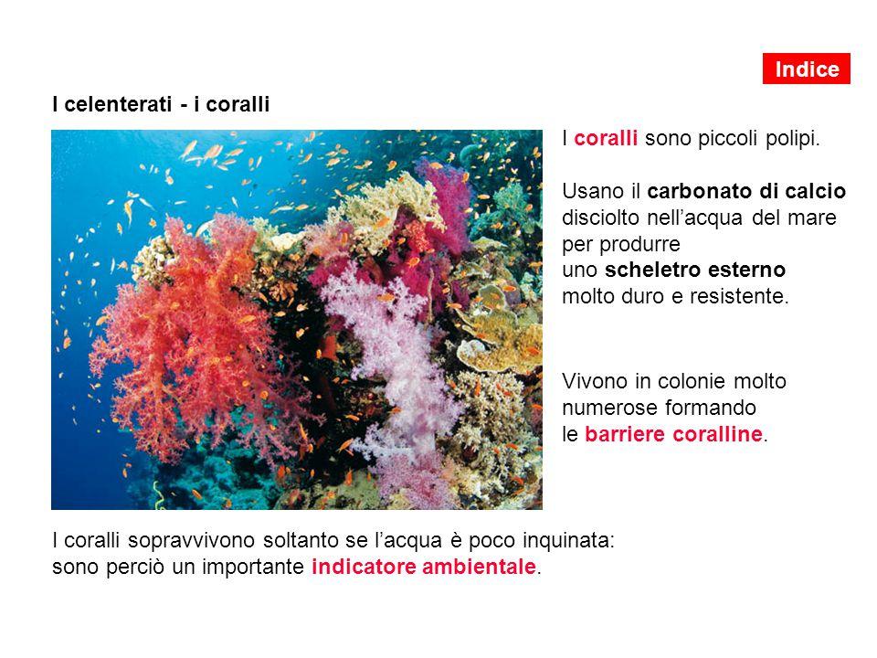 I celenterati - i coralli