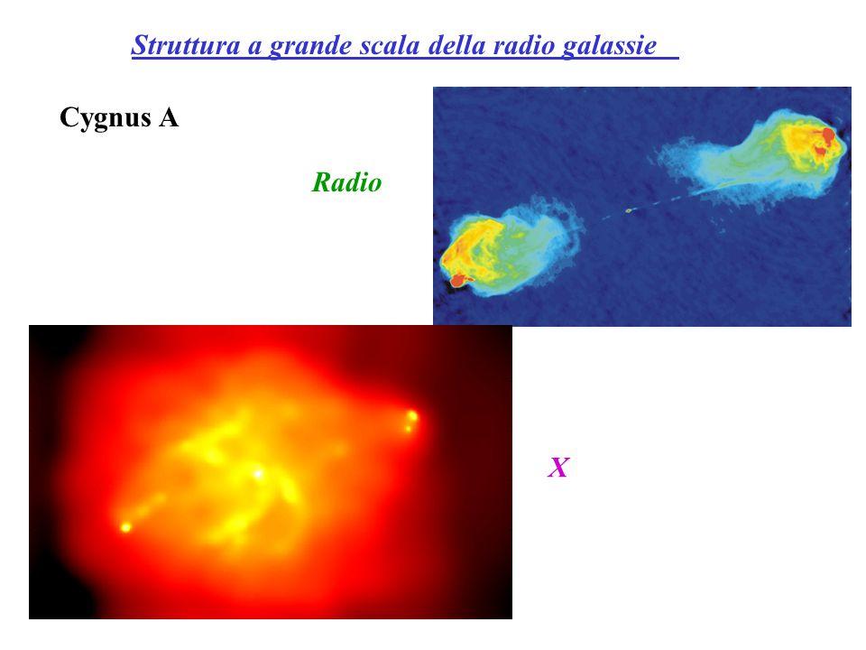 Struttura a grande scala della radio galassie