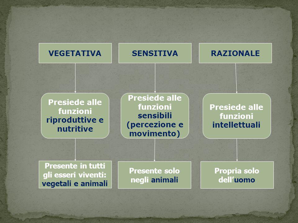 Presiede alle funzioni riproduttive e nutritive