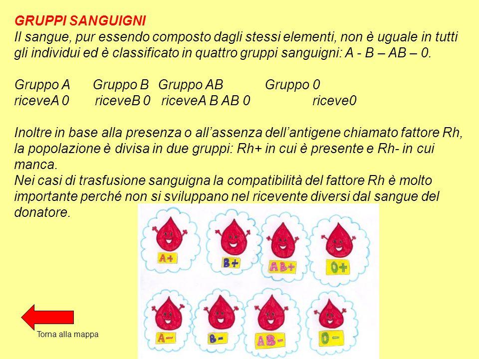 Gruppo A Gruppo B Gruppo AB Gruppo 0