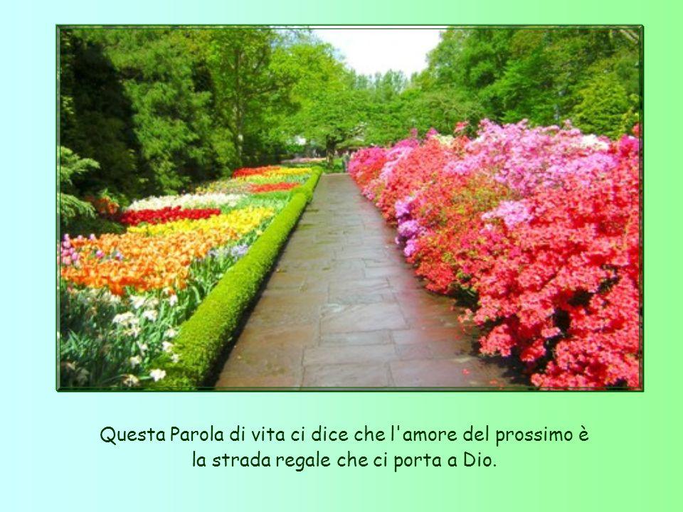 Questa Parola di vita ci dice che l amore del prossimo è la strada regale che ci porta a Dio.