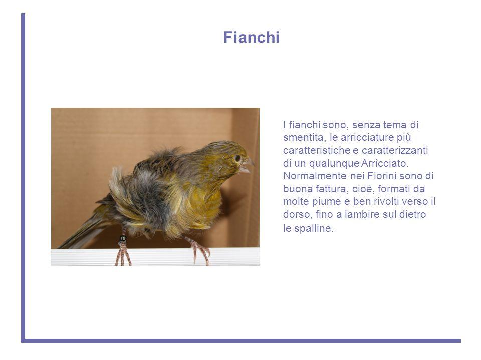 Fianchi
