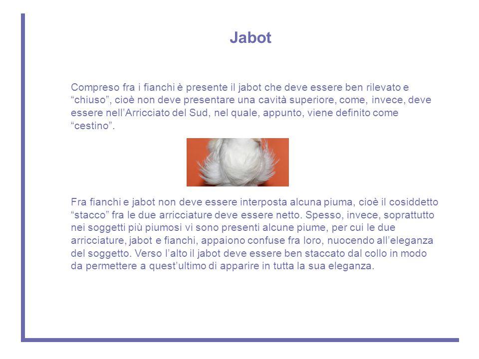 Jabot