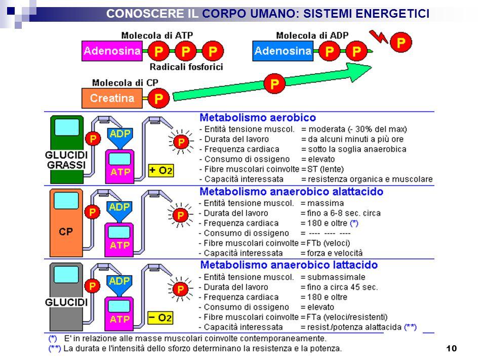 CONOSCERE IL CORPO UMANO: SISTEMI ENERGETICI