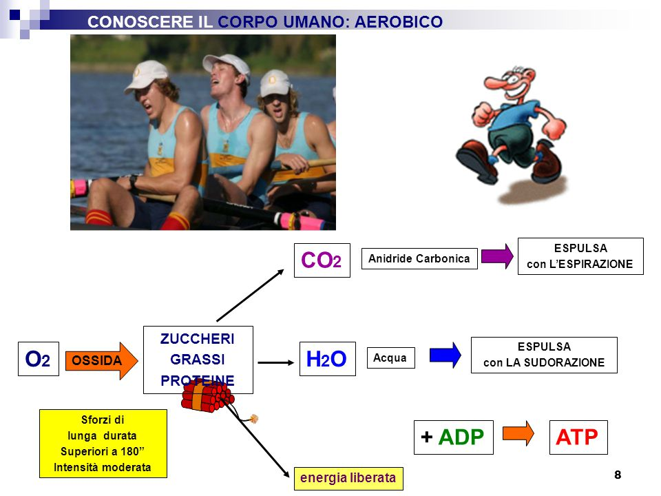 CO2 O2 H2O + ADP ATP CONOSCERE IL CORPO UMANO: AEROBICO ZUCCHERI