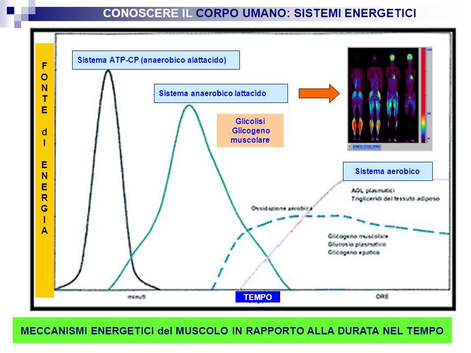 Sistema ATP-CP (anaerobico alattacido)