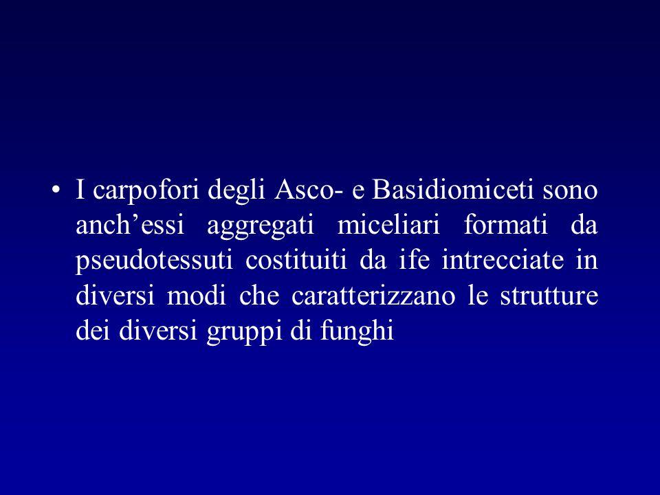 I carpofori degli Asco- e Basidiomiceti sono anch'essi aggregati miceliari formati da pseudotessuti costituiti da ife intrecciate in diversi modi che caratterizzano le strutture dei diversi gruppi di funghi