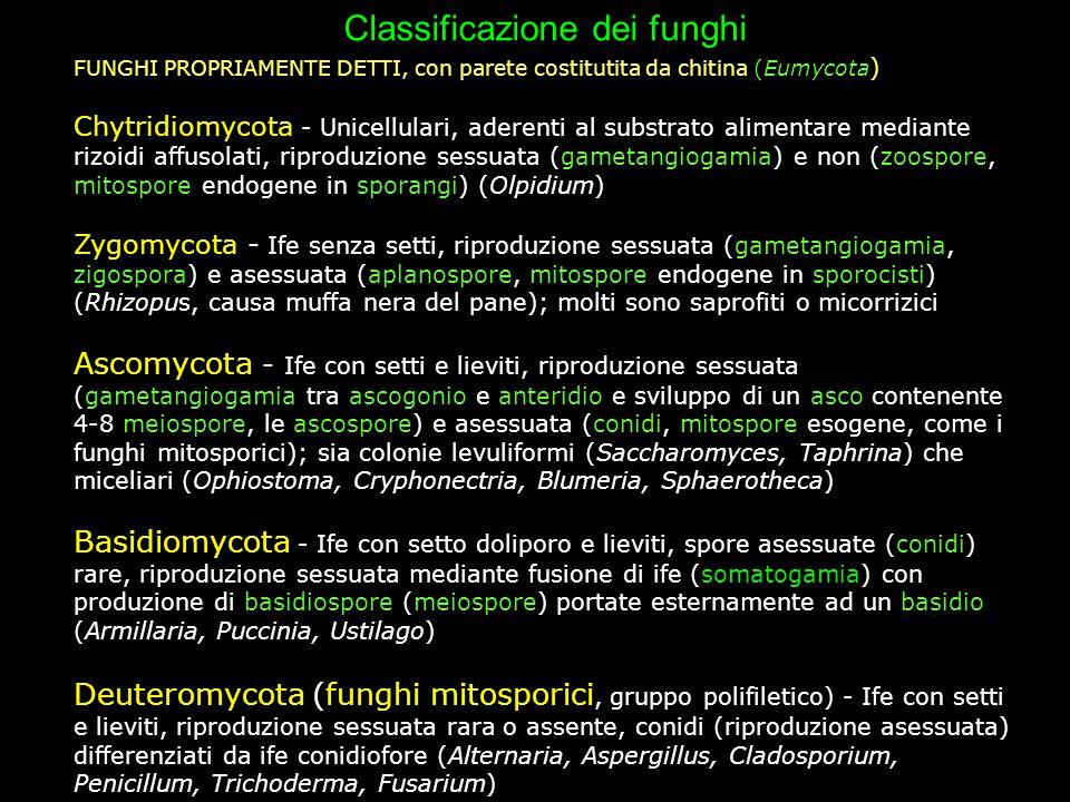Classificazione dei funghi