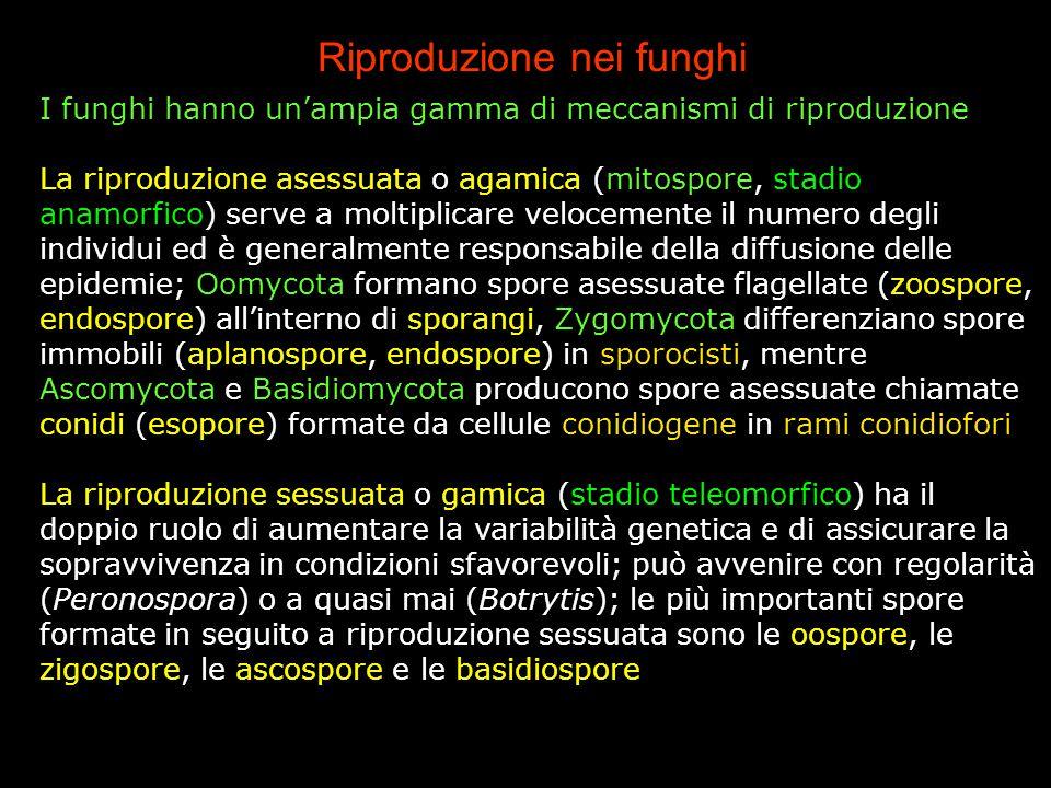 Riproduzione nei funghi
