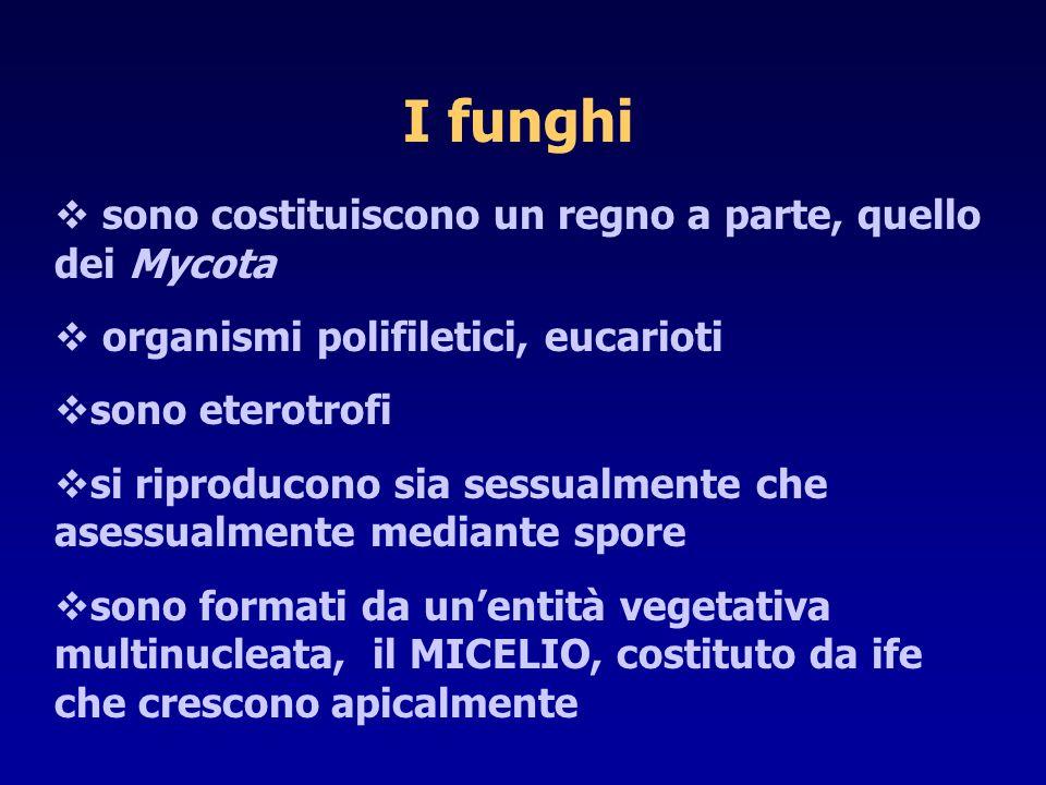 I funghi sono costituiscono un regno a parte, quello dei Mycota