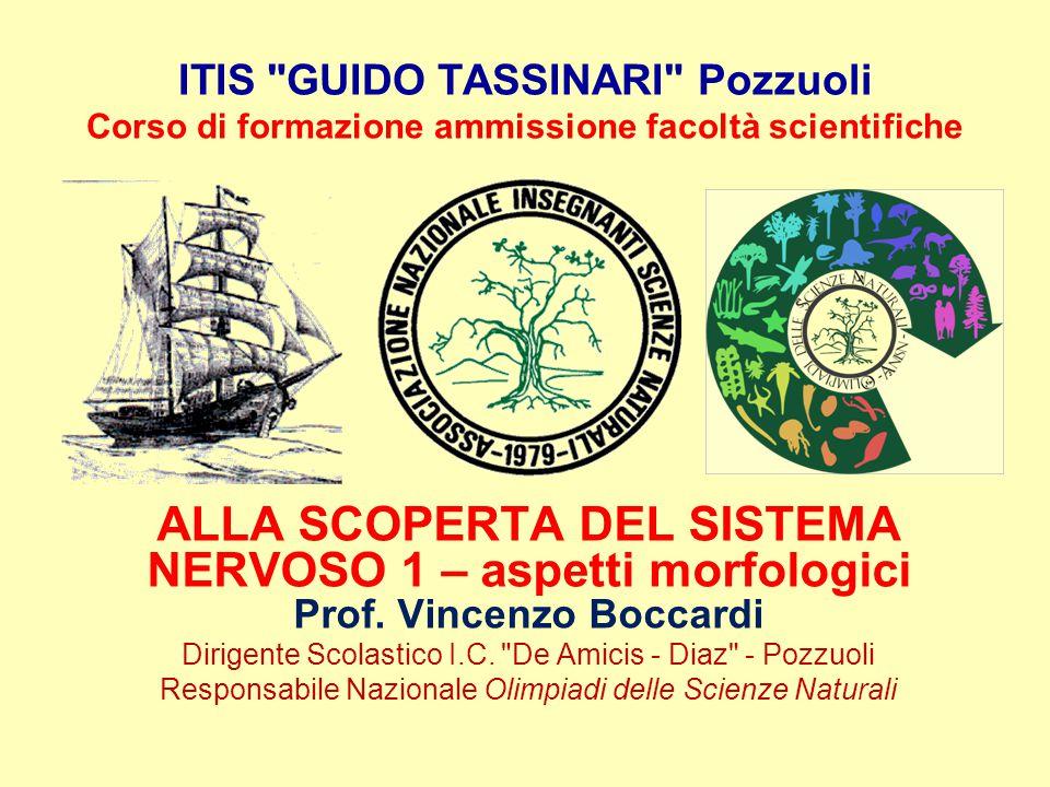 ITIS GUIDO TASSINARI Pozzuoli Corso di formazione ammissione facoltà scientifiche