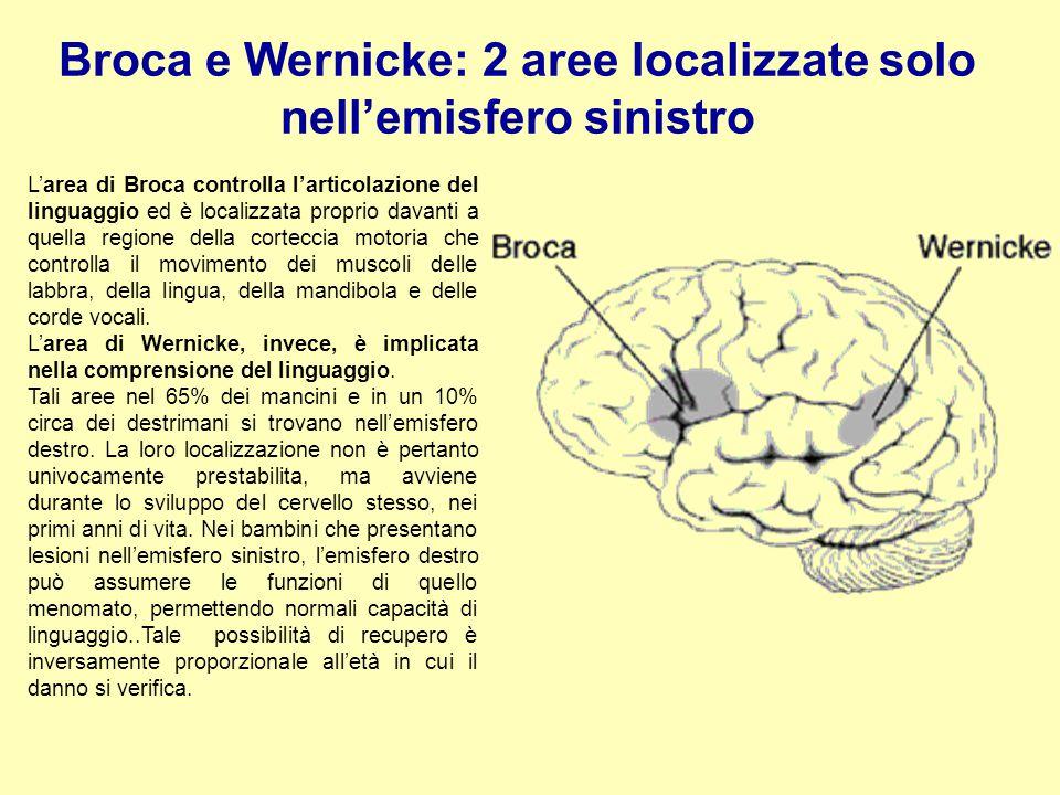 Broca e Wernicke: 2 aree localizzate solo nell'emisfero sinistro