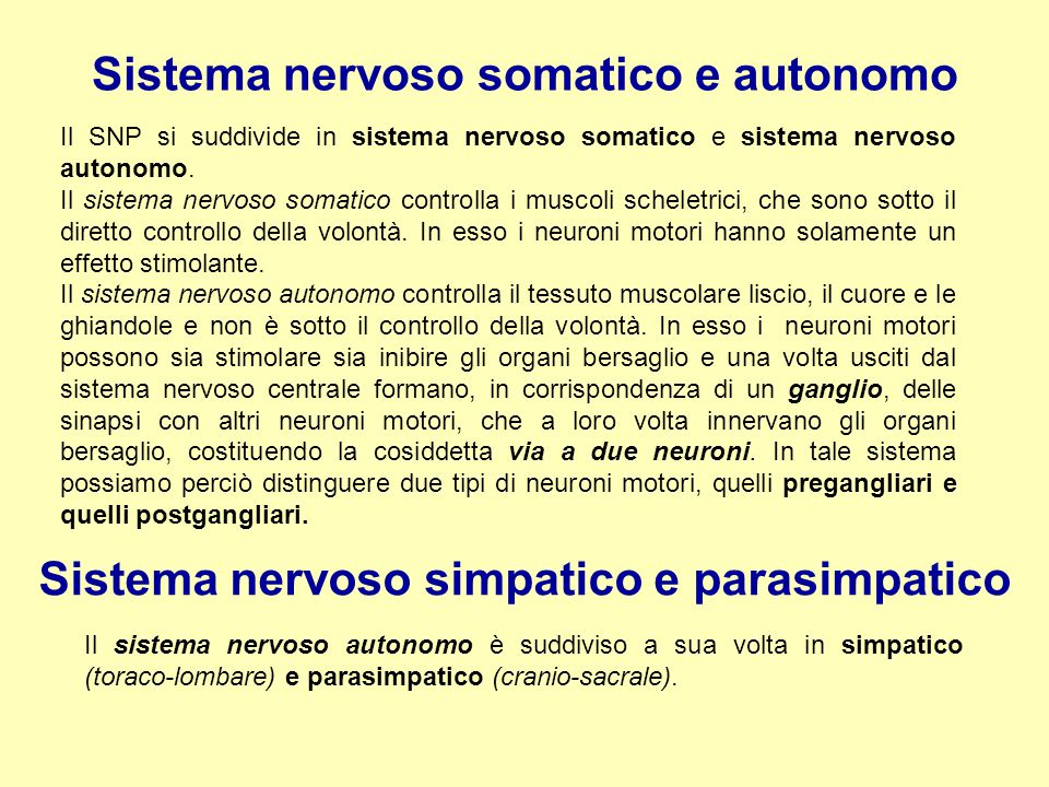 Sistema nervoso somatico e autonomo
