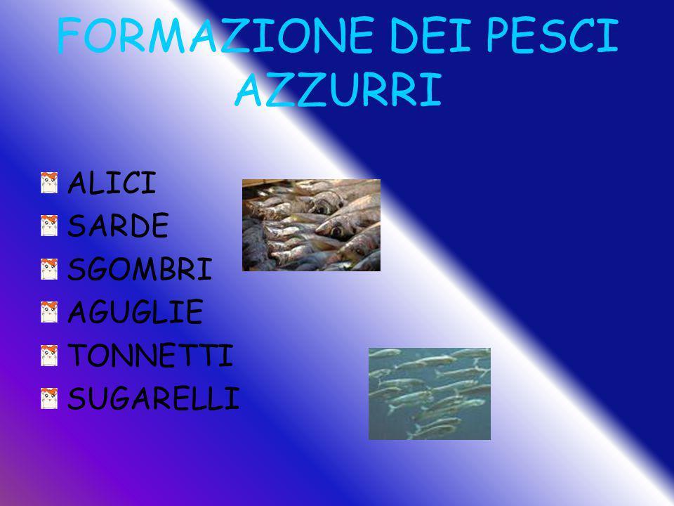 FORMAZIONE DEI PESCI AZZURRI