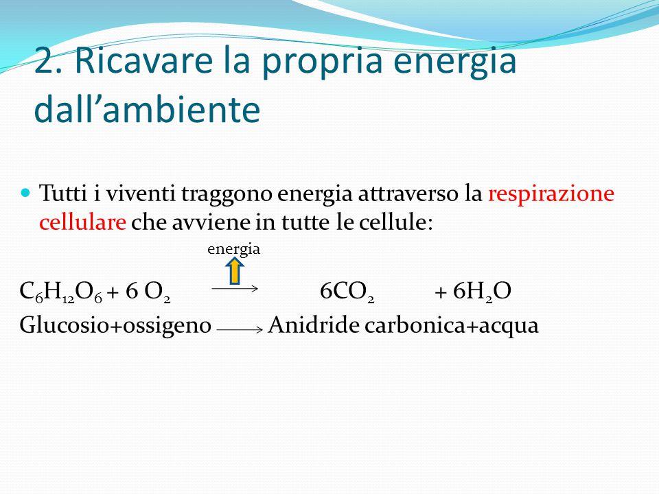 2. Ricavare la propria energia dall'ambiente