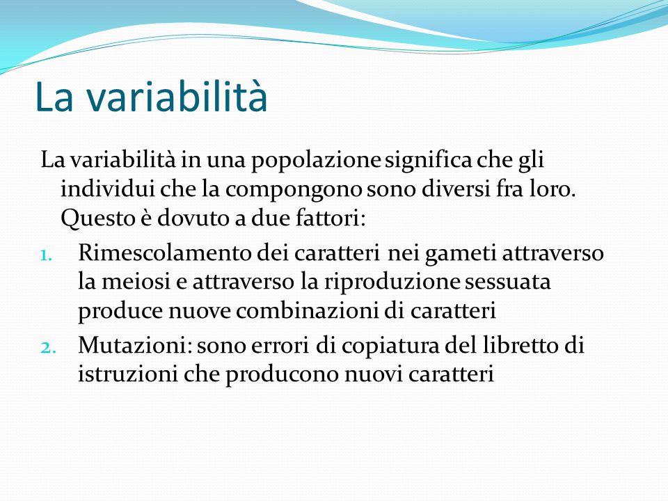 La variabilità La variabilità in una popolazione significa che gli individui che la compongono sono diversi fra loro. Questo è dovuto a due fattori: